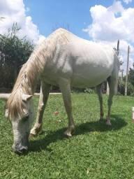 Égua super mansa