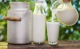 Venda de leite fresco