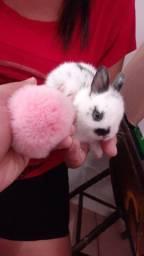 Mini coelhos muito fofinhos *-*