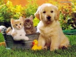 Vendo Pet Shop/ Casa de Ração