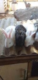Lidos filhotes de coelho gigante de flandes