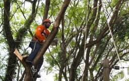 Poda de árvores, desenvolvimento e manutenção em bosques e pomares