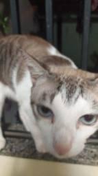 Proucurace gato chamado boran pago recompensa pra quem sober paradeiro
