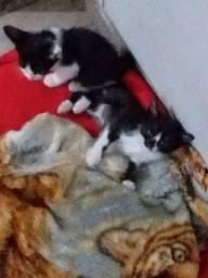 .4 gatinhos lindo.zap *