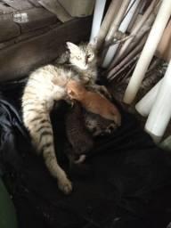 Estou doando esses filhotes de gatos