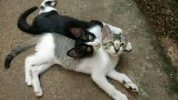 Doa-se Casal de Gatos, com Genética Excelente.