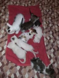 Filhotes de gatos !