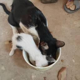 Gatinhos precisam de dono