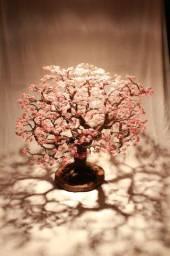 Ipê Rosa para Decoração de ambiente, vitrines, balcão