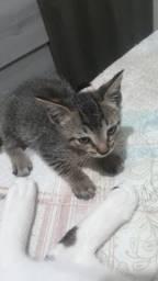 Doação gatinhos