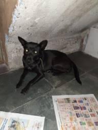Doação de cachorra castrada