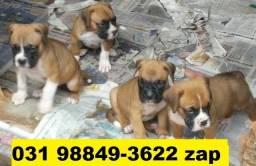 Canil Cães Filhotes Grande Porte BH Boxer Pastor Labrador Golden Akita Rottweiler Dálmata
