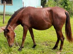 Cavalo(égua) e potro 6 meses