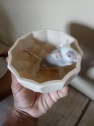 Filhotes de topolinos
