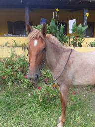 Cavalo para família