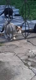 Lindos gatos adolescentes para doação. Castração garantida.