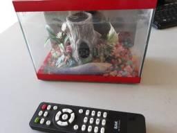 Aquarios para peixe Beta - penha - centro buscar no local