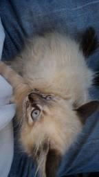 Gatinho filhote pra doação