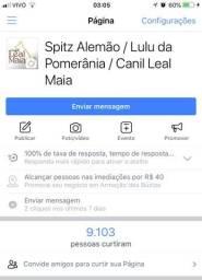 Canil Leal Maia / Spitz / Lulu / Conheça nosso Canil