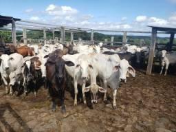 Fazenda de 487 Hectares mista de pecuária e cacau
