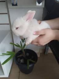 Filhote de coelho muito fofo