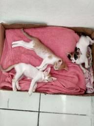 Doações de filhotes de gatos