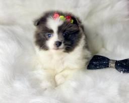 Doçura de filhote lindo disponível