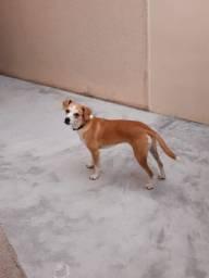 Doação de Cachorro Fêmea Castrada