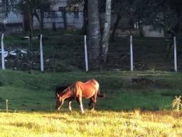 Troco Égua com potra por novilhas