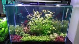 Aquario 105 litros