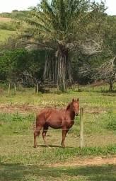 Título do anúncio: Cavalo inteiro painthorse PO registrado