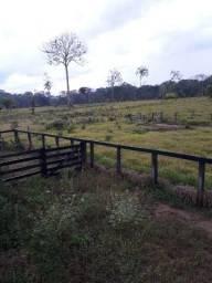 Colônia com 53 hectares