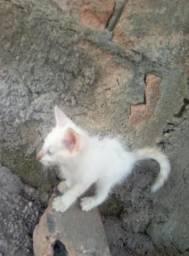 Doa-se gato raça Angorá