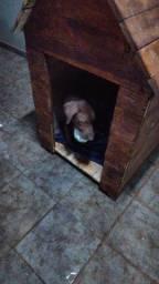 Vendo casa de cachorro usado poucos dias