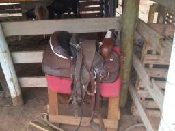 Vende-se cavalo e cela quarto de milha