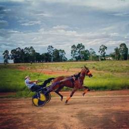 Cavalo American Trotter