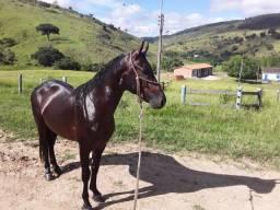 Cavalo macho manga larga machador