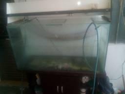 Aquário de peixe