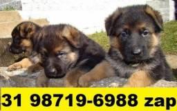 Canil Filhotes Cães Diversas Raças BH Pastor Akita Labrador Golden Chow Chow Rottweiler