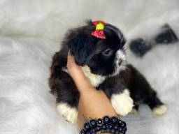 Fofura de Bebês Shih tzu mini com Pedigree
