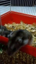 Vendo Hamsther