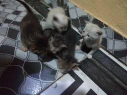 Doasse gatinhos