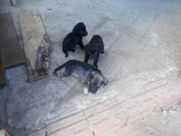 Doação de filhotes de cachorro.