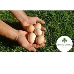 Ovos de capoeira orgânicos