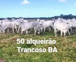 Fazenda região de Trancoso BA