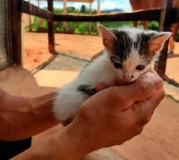 Doa-se gato filhote
