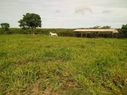 Fazenda para pecuária a 59 km do Trevo do Lagarto em Várzea Grande