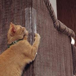 Sofá Protetor Gato Anti-arranhões Adesivo Proteção