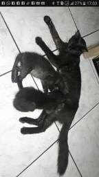 Doação de Gatas Mãe e Filhas