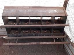 Vendo galinhas poedeira Embrapa 051 E hisex braw